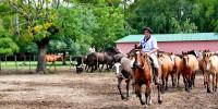 Tropilla - Horse Show