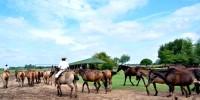 Tropilla-Horse Show