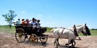 Carreta - Carriage